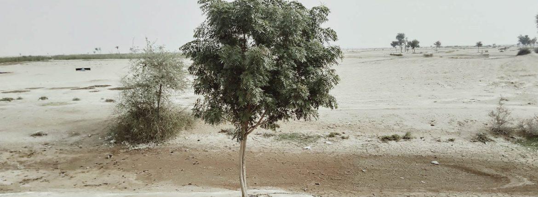 Neem tree at Wachho Pat