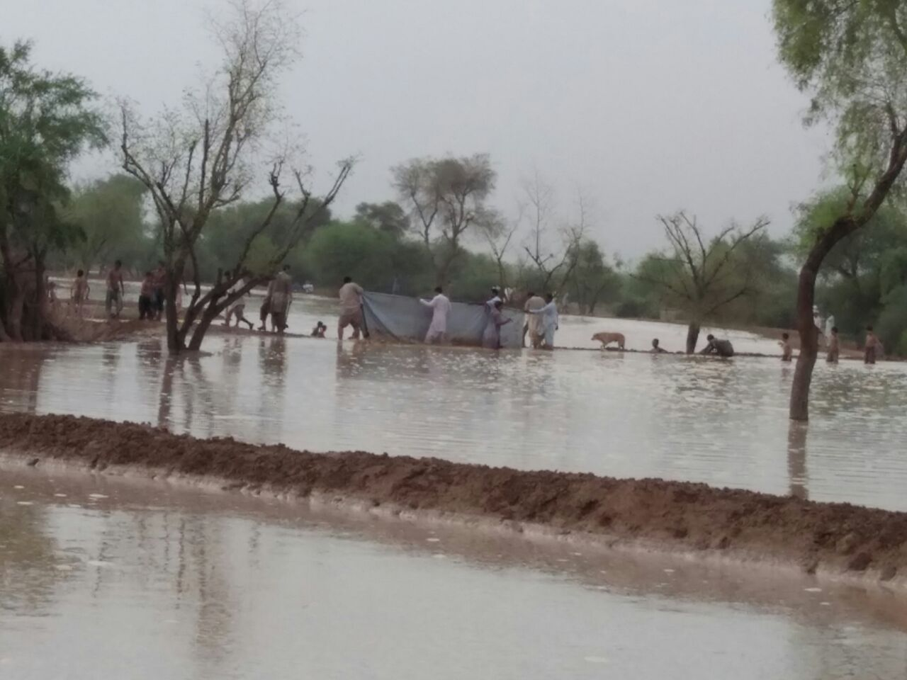 Breeach FIlling water stoppage with Cloth sheet and erecting new embankment behind it. Spate Irrigation Kot Kaisarani